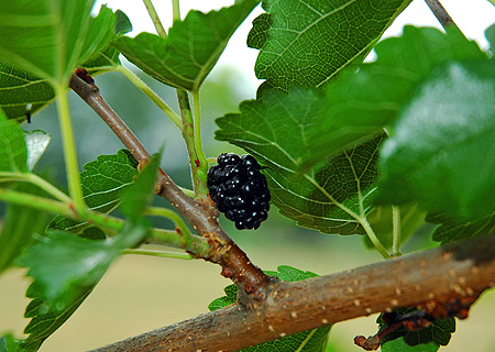 berry0619.jpg