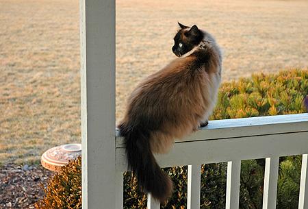 cat031307.jpg