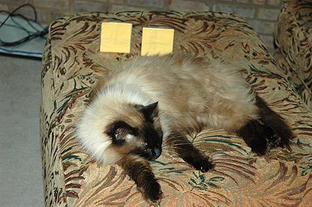 cheeseattack0107.jpg