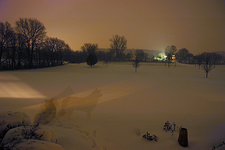snowdog1208.jpg
